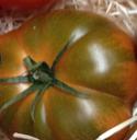 La sélection de la tomate sans goût